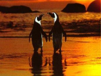 liebespaar 1 - Die Lisa ist zurück und philosophiert über die Liebe ohne Steuererklärung -