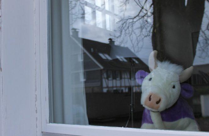 """m1 665x435 - Kooperation mit MILKA: Wie dieser """"Lila Liebling"""" zuerst Lisa auf dem Land und dann Katharina in der Stadt besuchen durfte - Ihr könnt zehn Lieblinge gewinnen! -"""