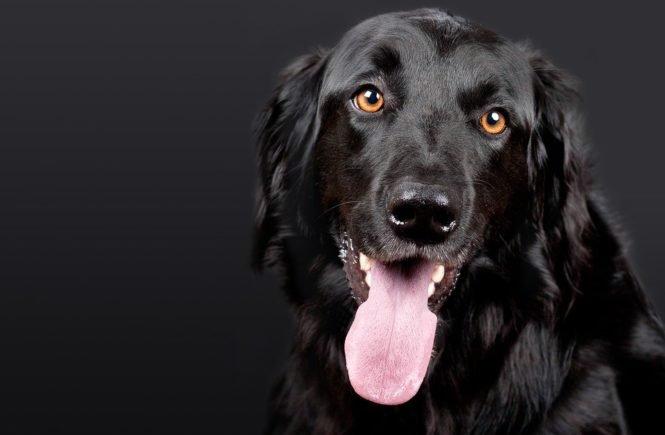 dog 1194087 960 720 665x435 - Gastbeitrag von Franzi: Was mein Sohn von unserem Hund lernt -