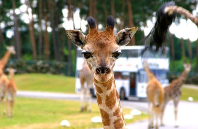 serengeti1 665x435 - Für die ganze Familie: Gewinnt einen Tag im Serengeti Park Hodenhagen -