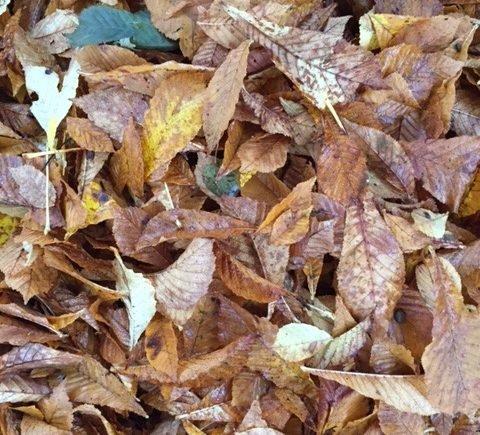 herbstlaub 480x435 - Herbst-Gefühle: Mutti muss mal ein bisschen jammern -