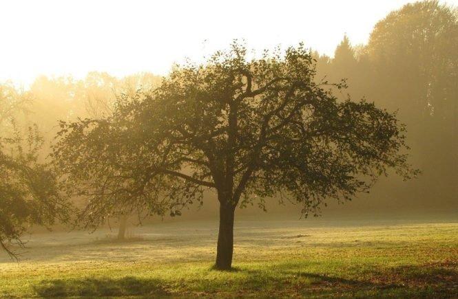 orchard 418888 960 720 665x435 - Gastbeitrag: Warum ich mich gegen ein Kind mit Down-Syndrom entschieden habe -