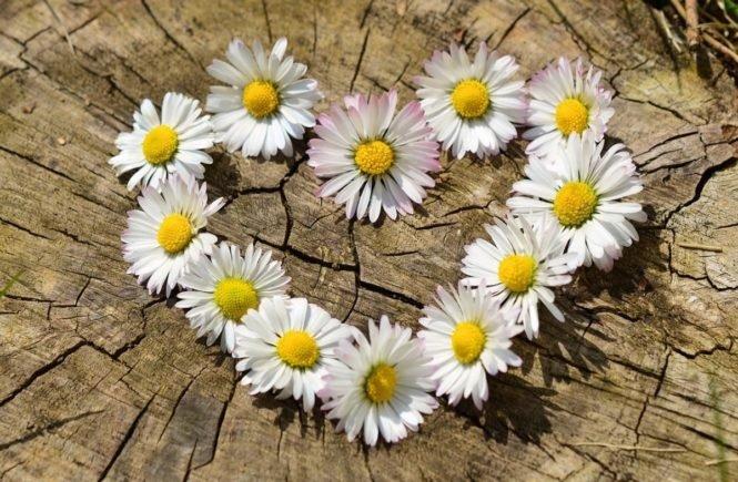 daisy 712892 1280 0 665x435 - Es ist Liebe - vier Leserinnen öffnen uns ihr Herz -