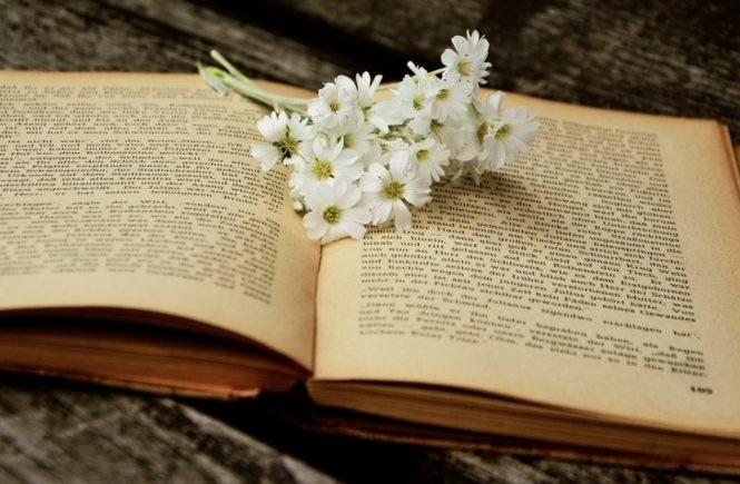 book 2363734 1280 665x435 - So ticken die Zwanzigjährigen von heute - Antwort von Anna -
