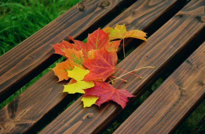 fall foliage 1740841 1280 665x435 - Gastbeitrag von Lotta: Wie soll man weiterleben, wenn der Bruder Suizid begangen hat? -