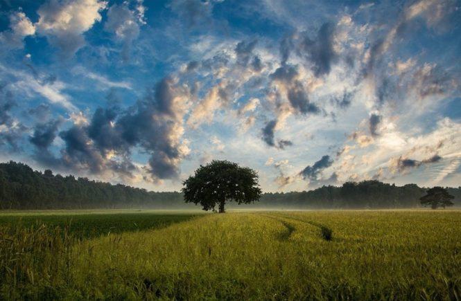 tree 247122 1280 665x435 - Leserfrage: Wer hat Erfahrung mit Depressionen bei Kindern? -