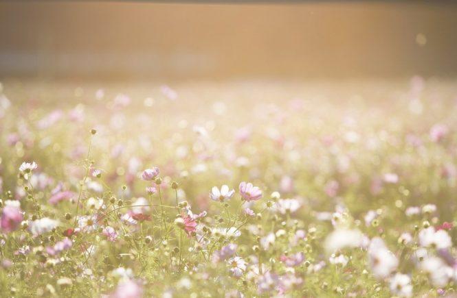 cosmos flowers 1138041 1280 665x435 - Würdest du das, was du zu dir selbst sagst, einer Freundin an den Kopf werfen? -