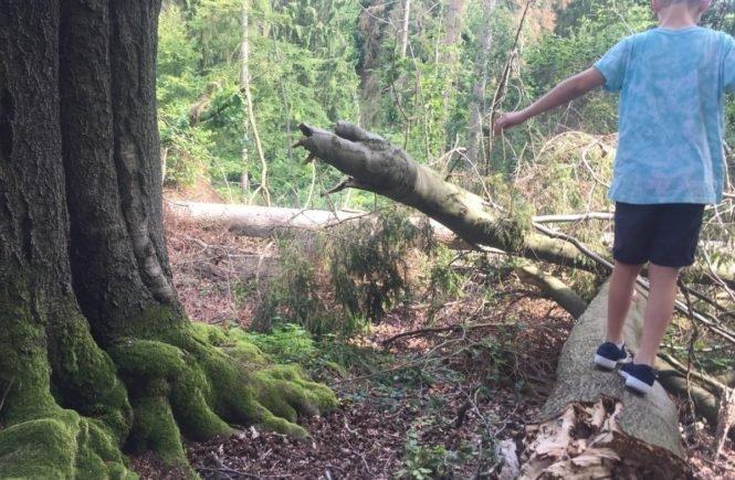 fruchtzwergebalance 0 665x435 - Ein Ausflug in den Wald! So baut ihr einen eigenen Barfuß-Parcours oder ein Wind- und Wasserrad aus FruchtZwerge BIO-Bechern -