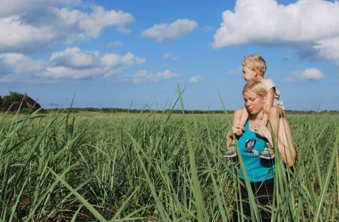 sugar cane 2309513 1280 665x435 - Umzug, neuer Job, neue Kita: Weil mein Sohn unglücklich war, änderten wir nochmal alles -
