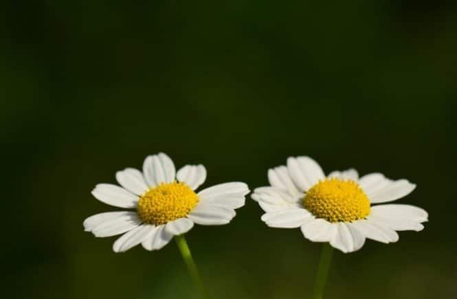 floral 3477942 1280 665x435 - Warum 2019 ein Jahr der Wunder für unsere Zwilllings-Frühchen war -