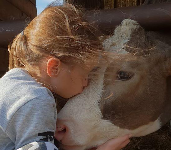 """Kuh1 - Kuh1 - Die zehnjährige Lena hat ein ganz besonderes """"Hobby"""" - nämlich eine Kuh."""
