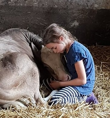 """Kuh3 - Kuh3 - Die zehnjährige Lena hat ein ganz besonderes """"Hobby"""" - nämlich eine Kuh."""