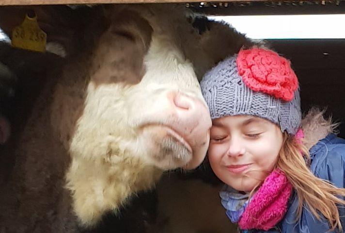 """Kuh4 - Kuh4 - Die zehnjährige Lena hat ein ganz besonderes """"Hobby"""" - nämlich eine Kuh."""