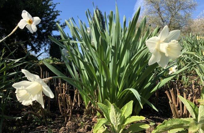 Blumen 665x435 - FROHE OSTERN 2020 -